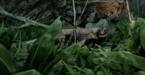 Far-Cry-3-Komodo-Dragon